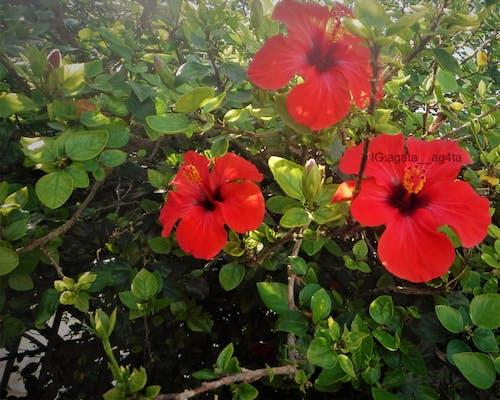 Fotobanka sbezplatnými fotkami na tému červená, červené kvety, červený kvet