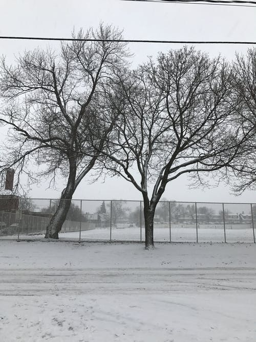 Free stock photo of dead tree, snow, street