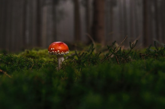 Free stock photo of nature, red, forest, macro