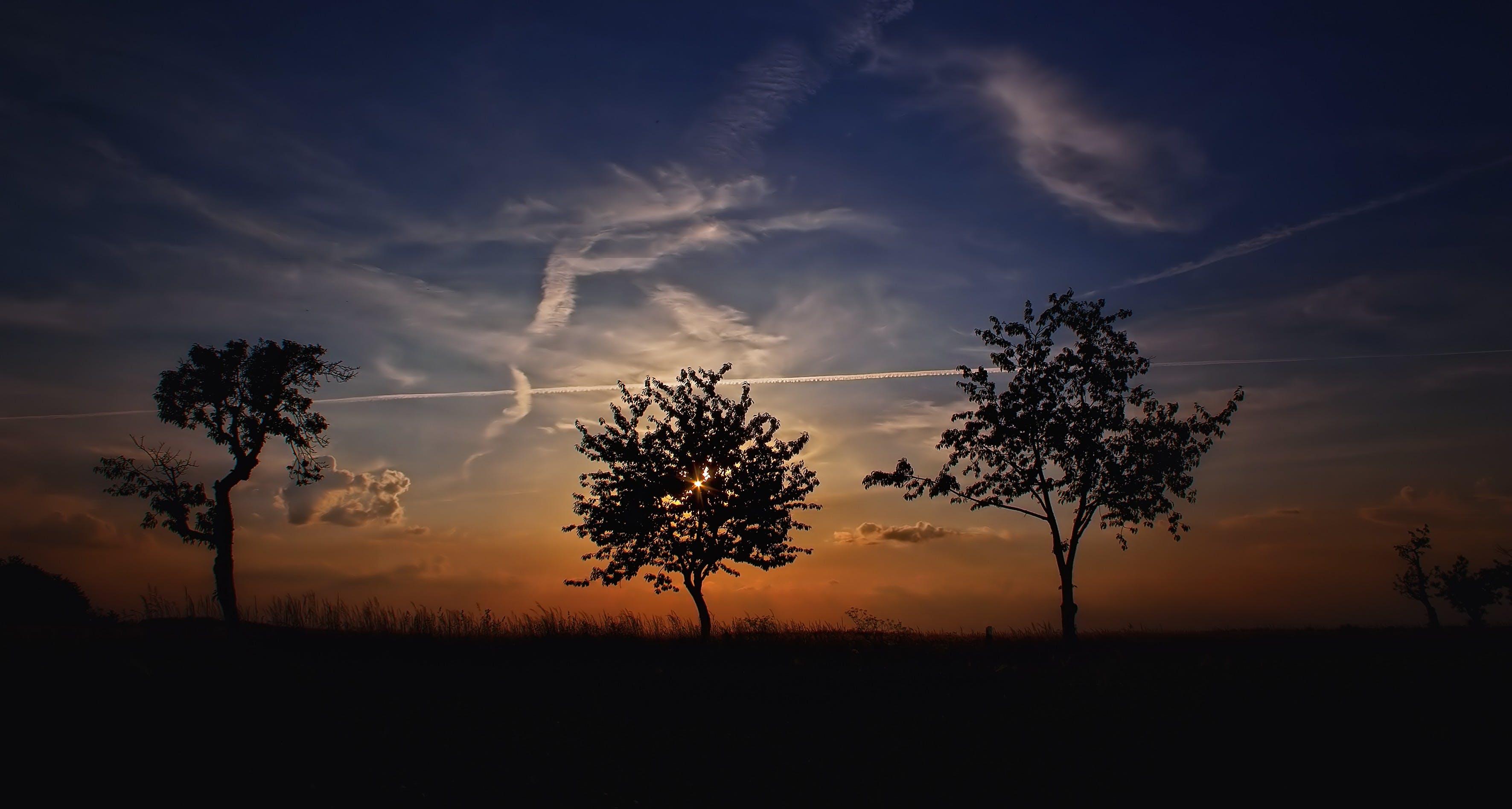 bäume, dämmerung, himmel