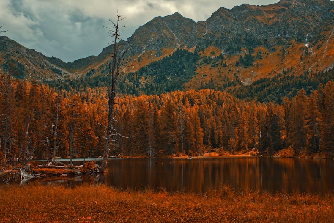 가을, 가을 기분, 가을 분위기 숲