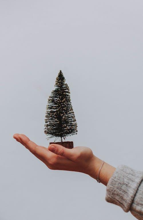 Foto profissional grátis de acessório, árvore, árvore de Natal, celebração