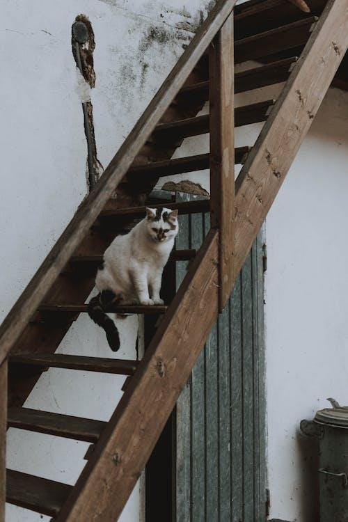 Gratis stockfoto met hout, kat, katten