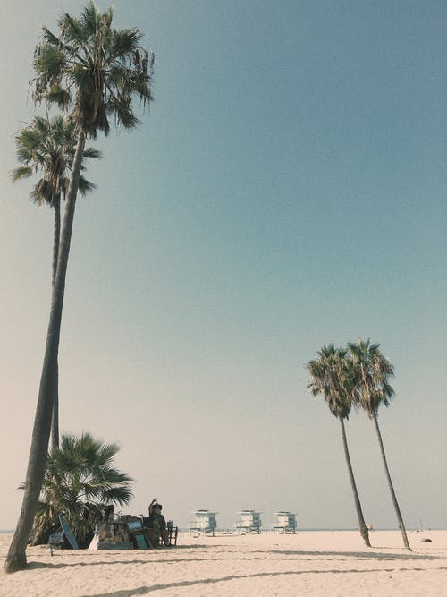 Gratis arkivbilde med dagslys, himmel, kokospalmer, palmetrær