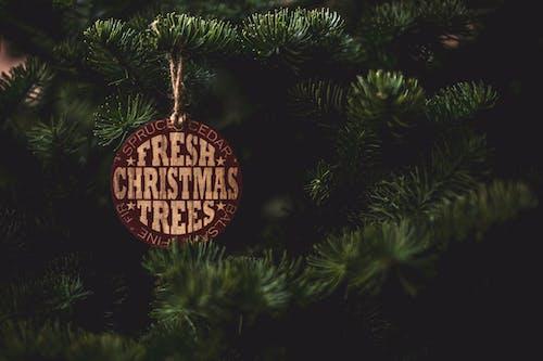 Imagine de stoc gratuită din agățat, arbore, brad de crăciun, celebrare