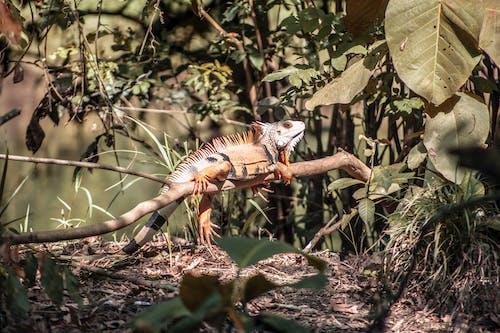Fotobanka sbezplatnými fotkami na tému divá príroda, divočina, exotický, exteriéry
