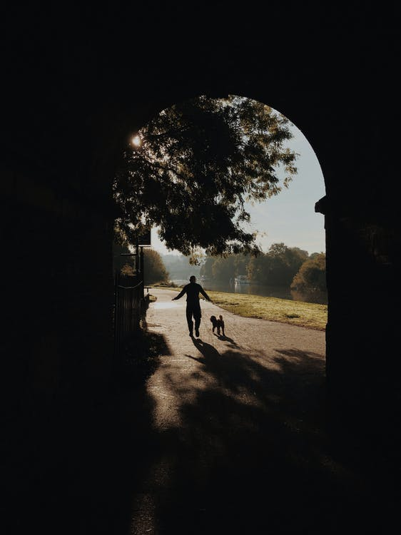 Silhouette Photo Of Person Beside Dog