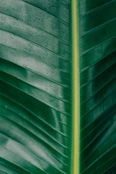 Free stock photo of nature, plant, leaf, botanical