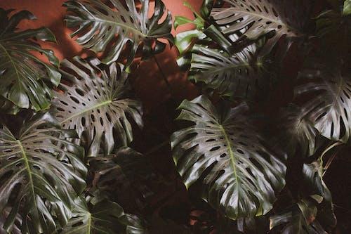 Бесплатное стоковое фото с выращивание, выращивать, заводы, зеленые листья