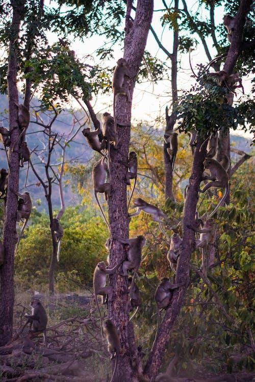 Imagine de stoc gratuită din faună sălbatică, maimuțe, natură, panică