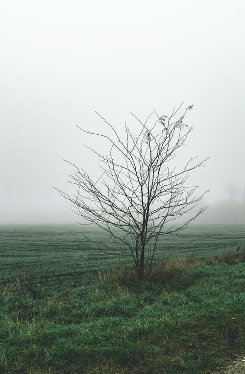 Photo of Bare Tree on Grass Field