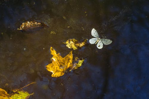 White Butterfly on Body of Water