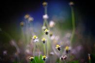 light, nature, field