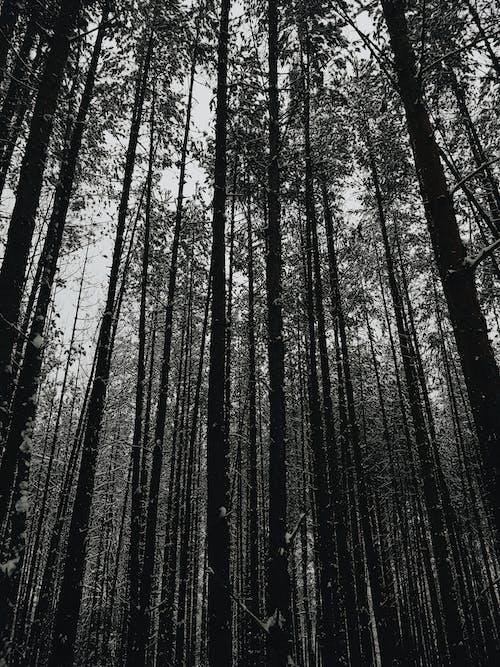 Ingyenes stockfotó fekete erdő, sötét, tél, természet témában