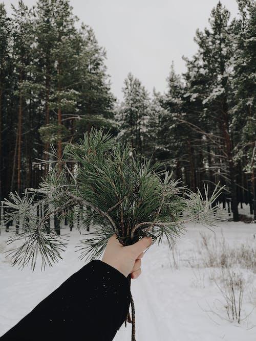 Fotos de stock gratuitas de invierno, naturaleza
