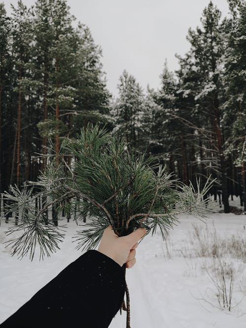 Free stock photo of nature, winter