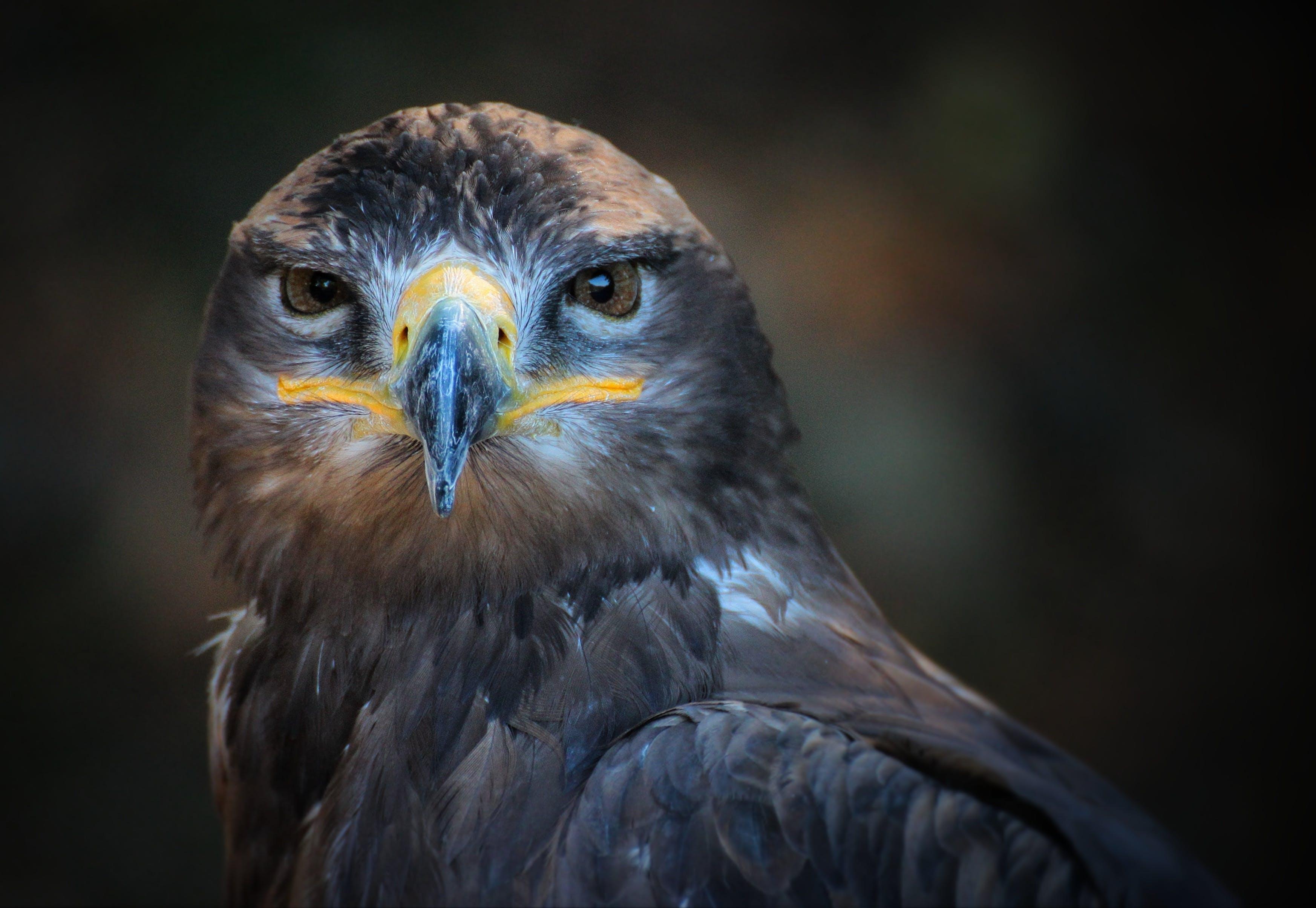 Kostenloses Stock Foto zu vogel, tier, eule, makro