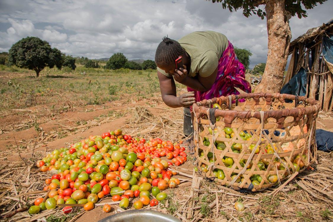 Kostnadsfri bild av matmarknad