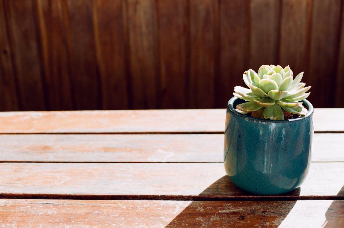 Green Succulent Plant in Blue Ceramic Pot