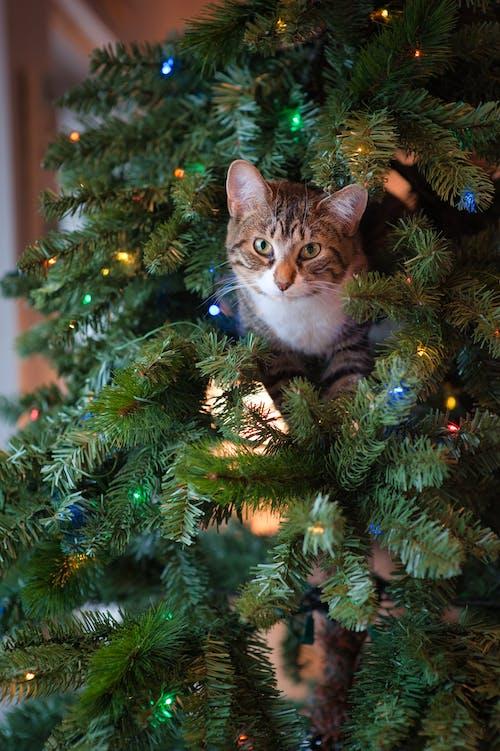 Δωρεάν στοκ φωτογραφιών με αιλουροειδές, Γάτα, δέντρο, ζώο