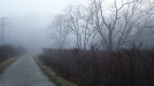 Free stock photo of mist, Morning Fog, trail, trees