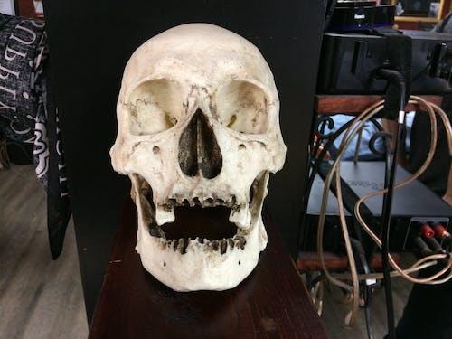 Free stock photo of bones, dead, human skull, skull