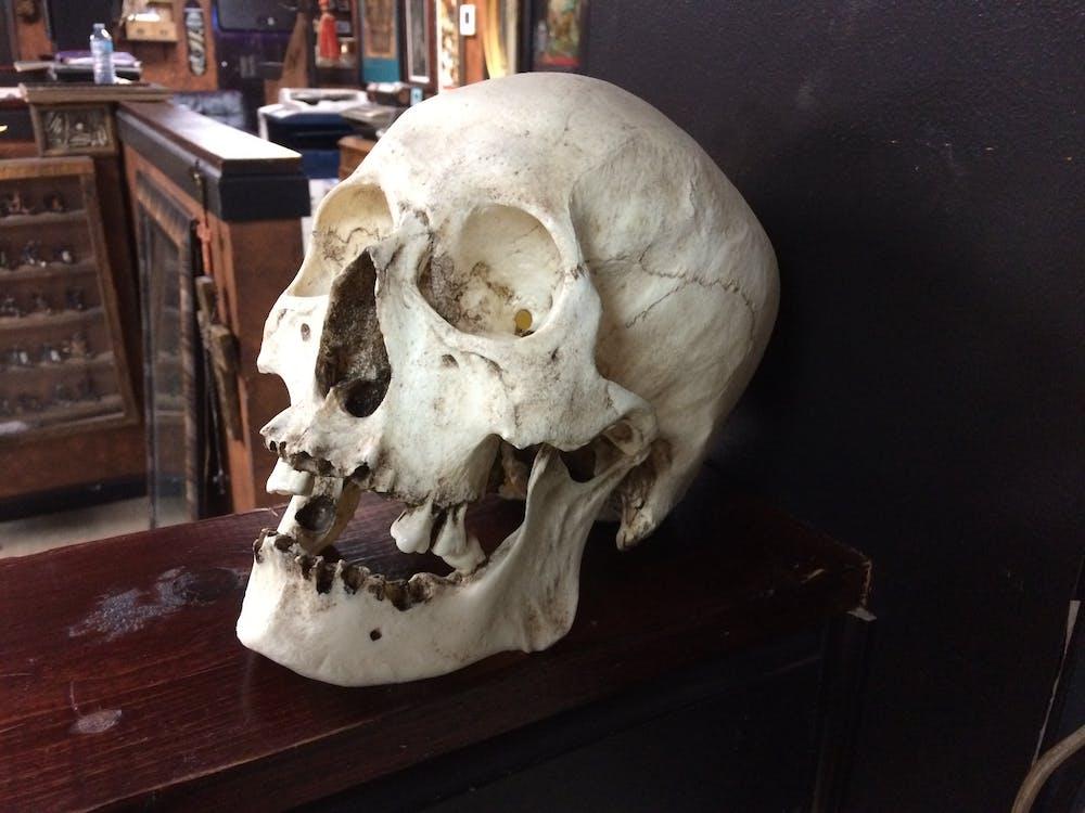 bones, dead, human skull