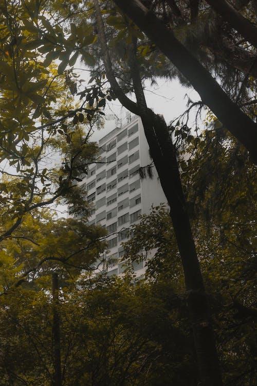Darmowe zdjęcie z galerii z krajobraz, środowisko, zieleń, zielona roślina