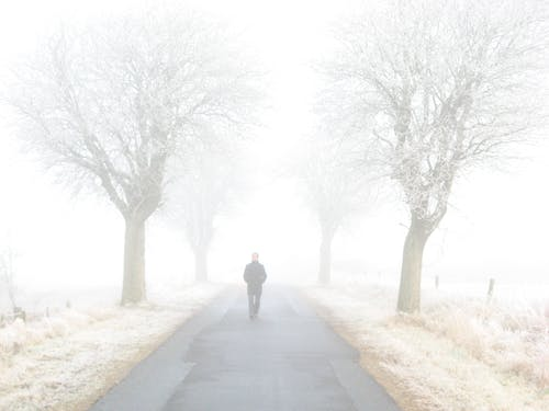 Man Standing on Road Between Bare Trees
