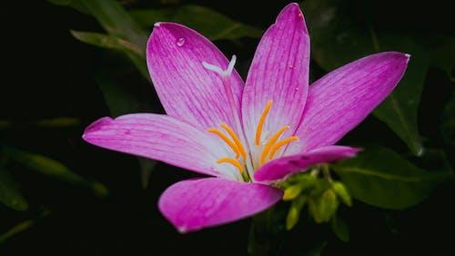 Ilmainen kuvapankkikuva tunnisteilla elämää luonnossa, kauneus luonnossa, kaunis kukka, kukka