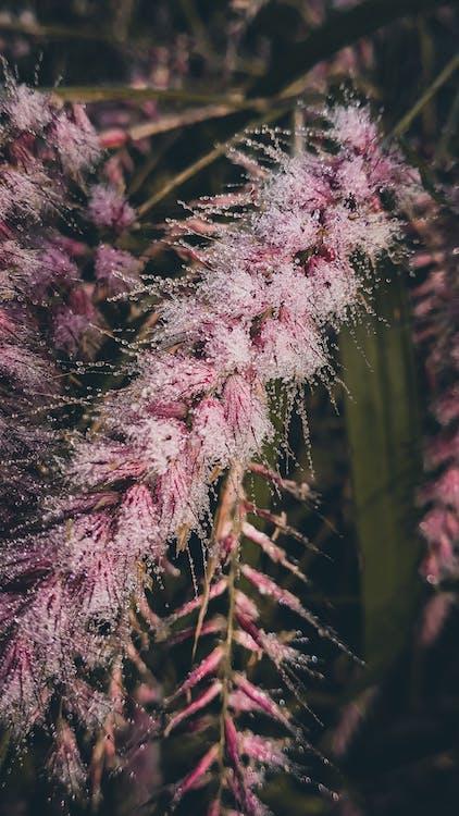 beleza da natureza, close, fotografia