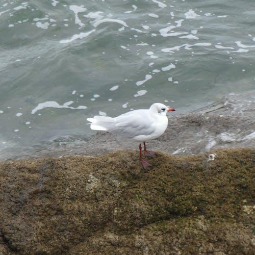 Gratis stockfoto met animalier, eau, faune, mer