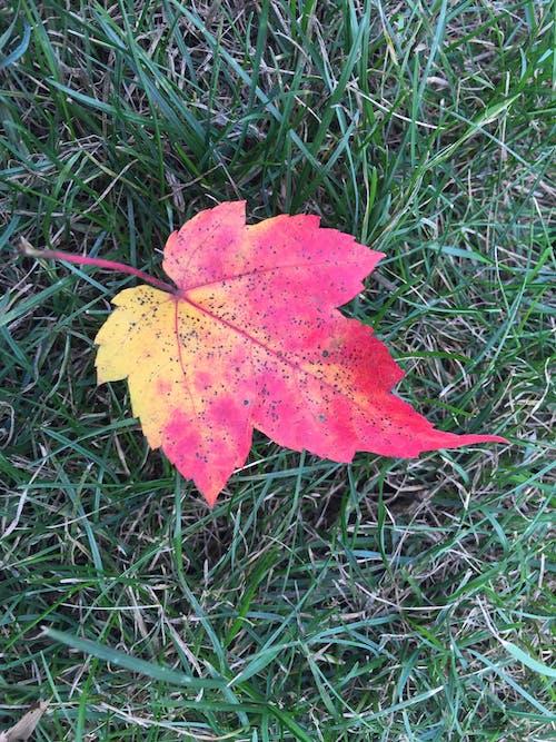 Δωρεάν στοκ φωτογραφιών με #autumn #leaf #fall #έκδοση