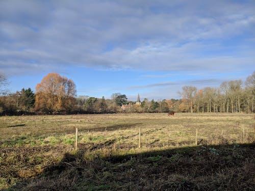 Imagine de stoc gratuită din câmp, iarnă, lan
