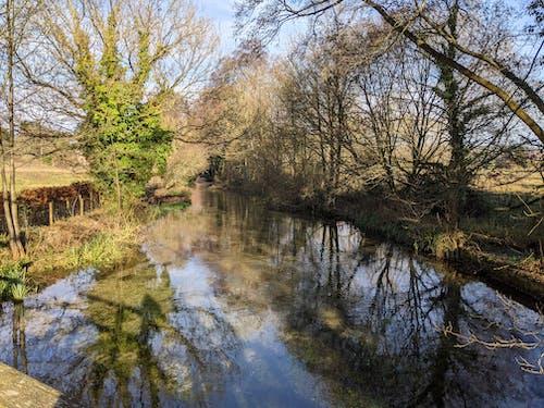 Imagine de stoc gratuită din apă curgătoare, copacii de iarna, iarnă