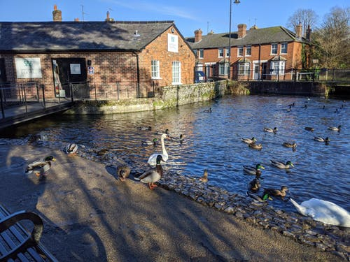 Free stock photo of ducks, Hampshire, old village