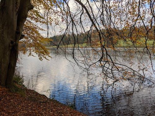 Imagine de stoc gratuită din Anglia, arbore, aventură