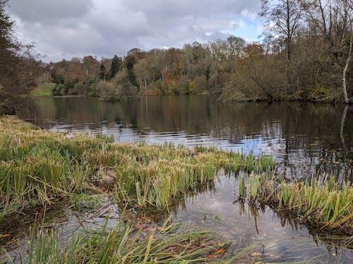 Imagine de stoc gratuită din fonthill, iarnă, lac