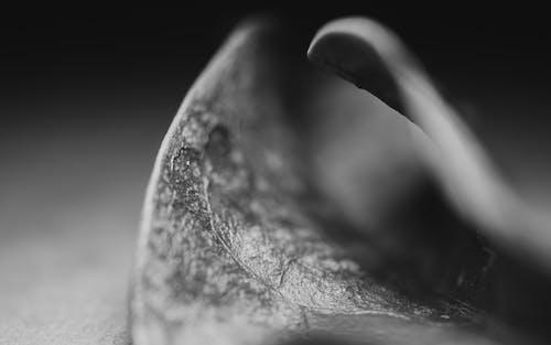 Immagine gratuita di bianco e nero, dettaglio, foglia, macro
