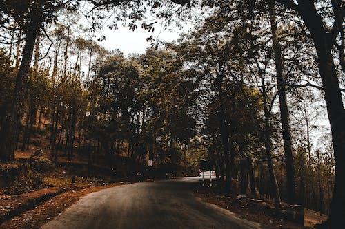 คลังภาพถ่ายฟรี ของ กลางแจ้ง, การท่องเที่ยว, คำแนะนำ, ต้นไม้