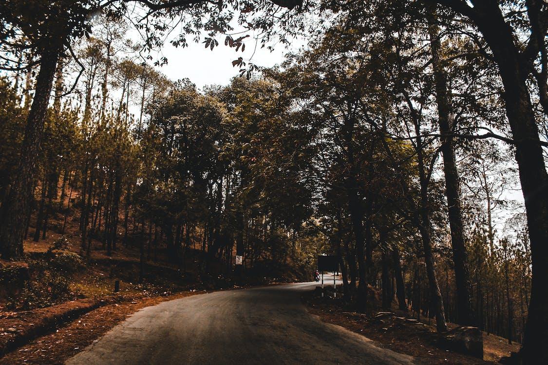 ajorata, luonto, matkustaa
