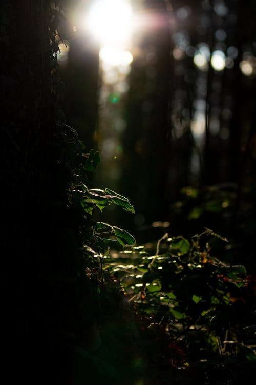 Free stock photo of dark green, dense forest, exposure, greenwood