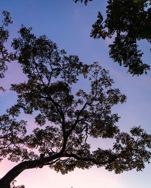 Imagine de stoc gratuită din arbori, cer aprins, codru, contrast