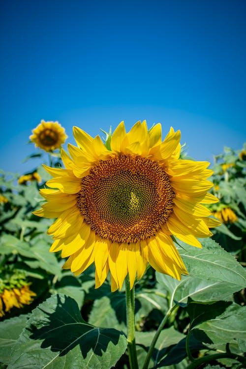 Fotos de stock gratuitas de crecimiento, delicado, flor amarilla, flora