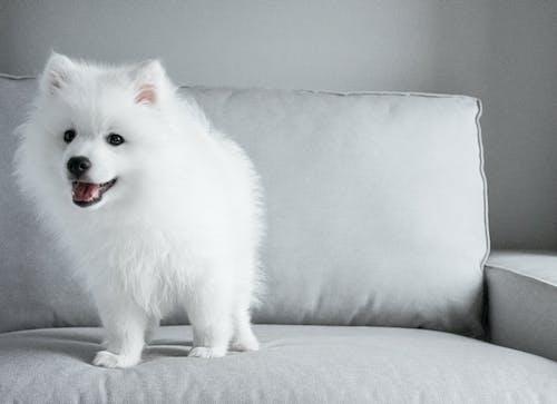 강아지, 개, 귀여운, 그레이의 무료 스톡 사진