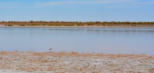 Free stock photo of animal, bird, landscape, salt lake