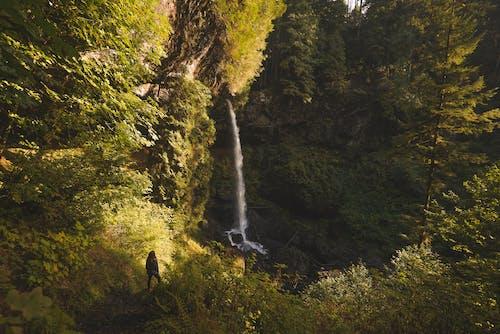 Photos gratuites de arbre, aventure, beauté dans la nature, beauté de la nature