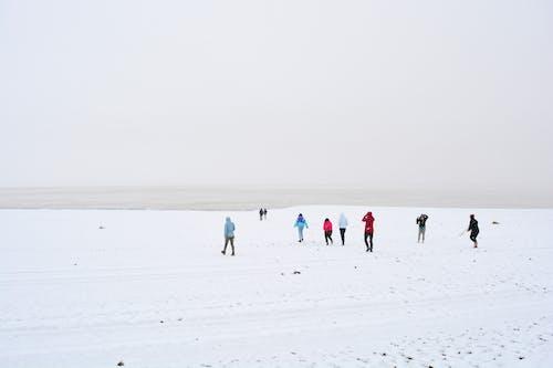 Free stock photo of lake, landscape, snow, snowy