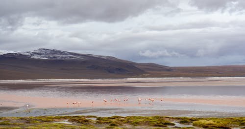 Free stock photo of animal, cloud, flamingo, lake