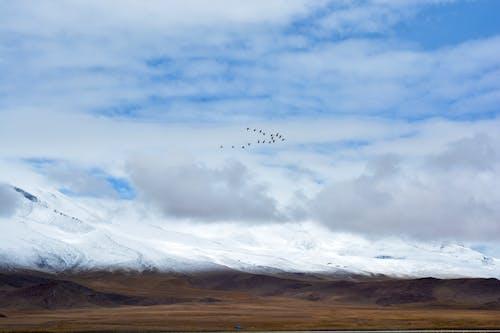 Free stock photo of animal, cloud, flamingo, fly